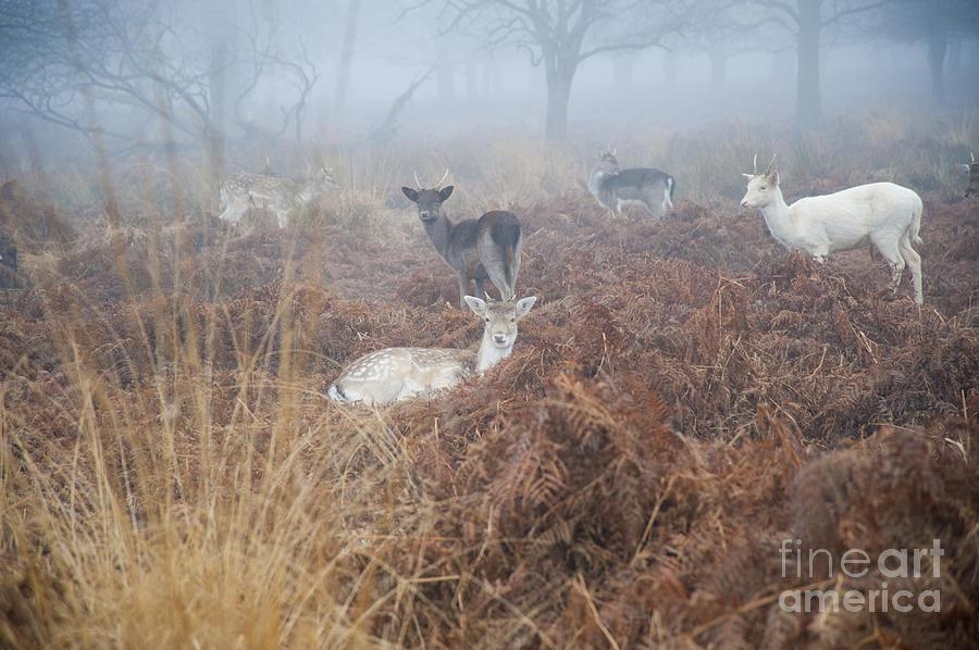 Kingston Park Photograph - Deer In The Mist by Donald Davis