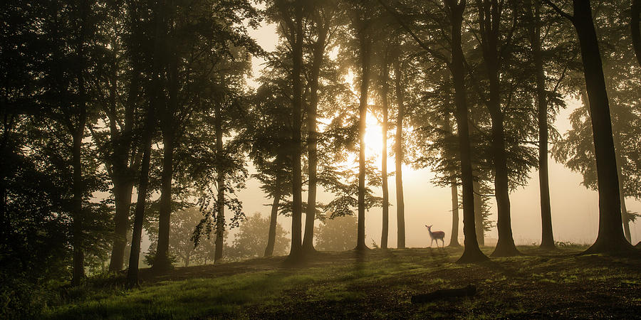 Denmark Photograph - Deer In The Morning Mist. by Leif L??ndal