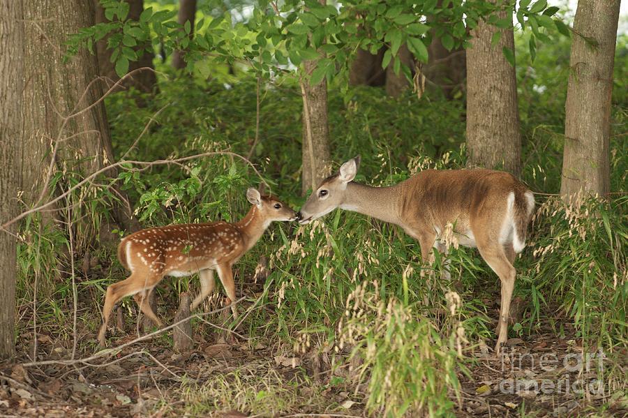 Deer Love by Miguel Celis