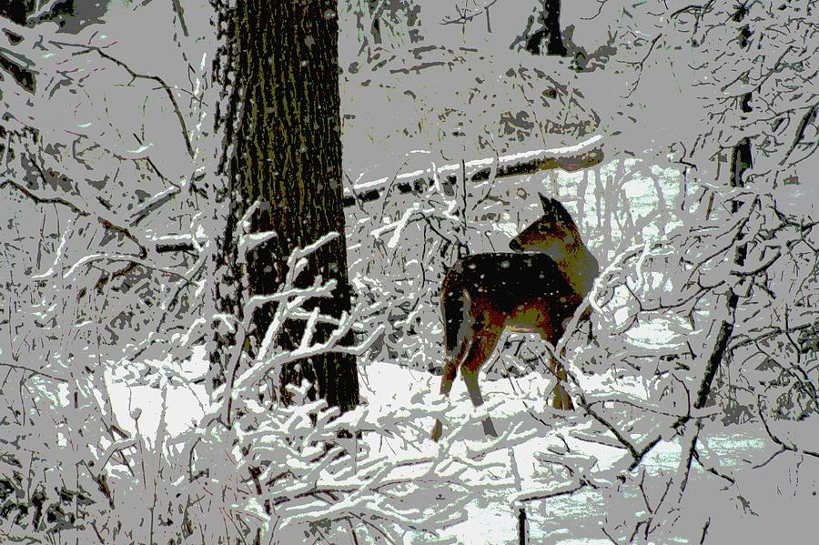 Deer Photograph - Deer On Snowy Trail by Sharon McLain
