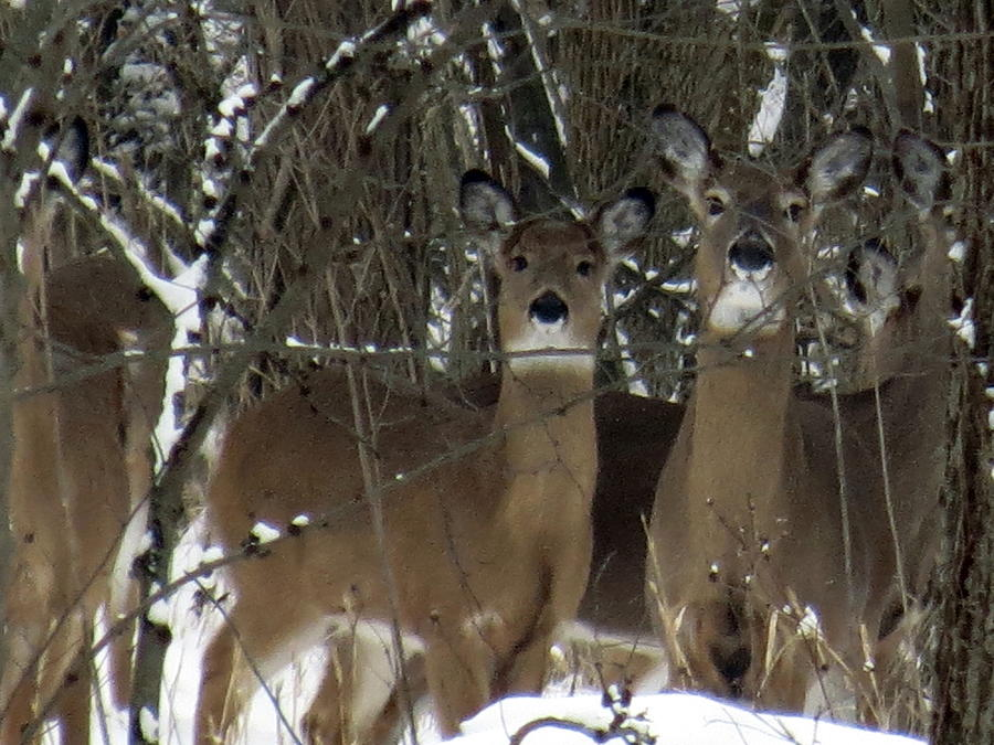 Deer Posing for Picture by Eric Switzer