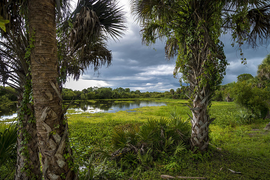 Palm Trees Photograph - Deer Prairie Creek by Russ Burch