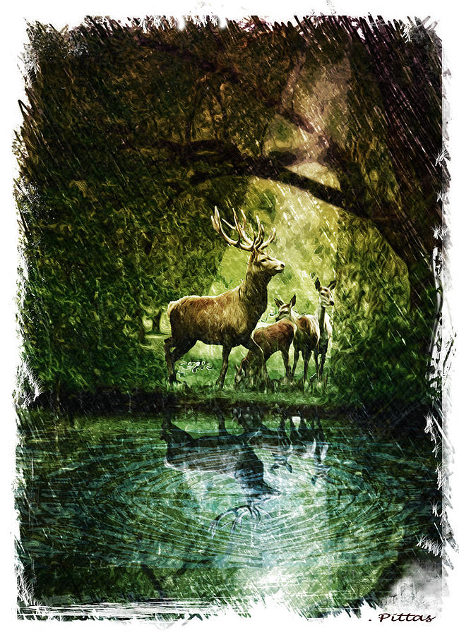 Deer Reflections Drawing by Michael Pittas
