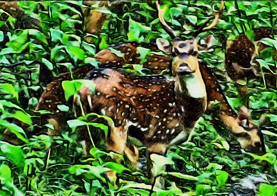 Deer Valley Painting - Deers Green Day by Withintensity  Touch