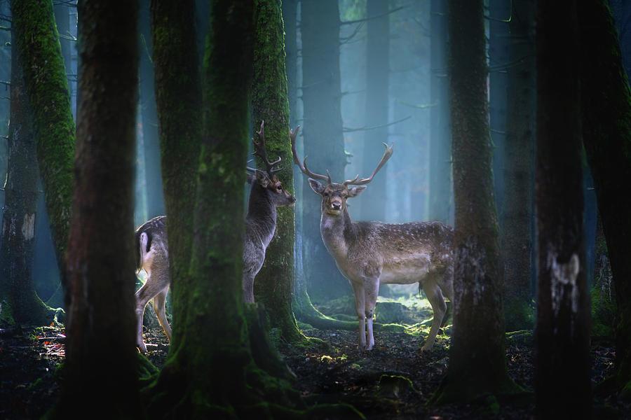 Animal Photograph - Deers by Patrick Aurednik