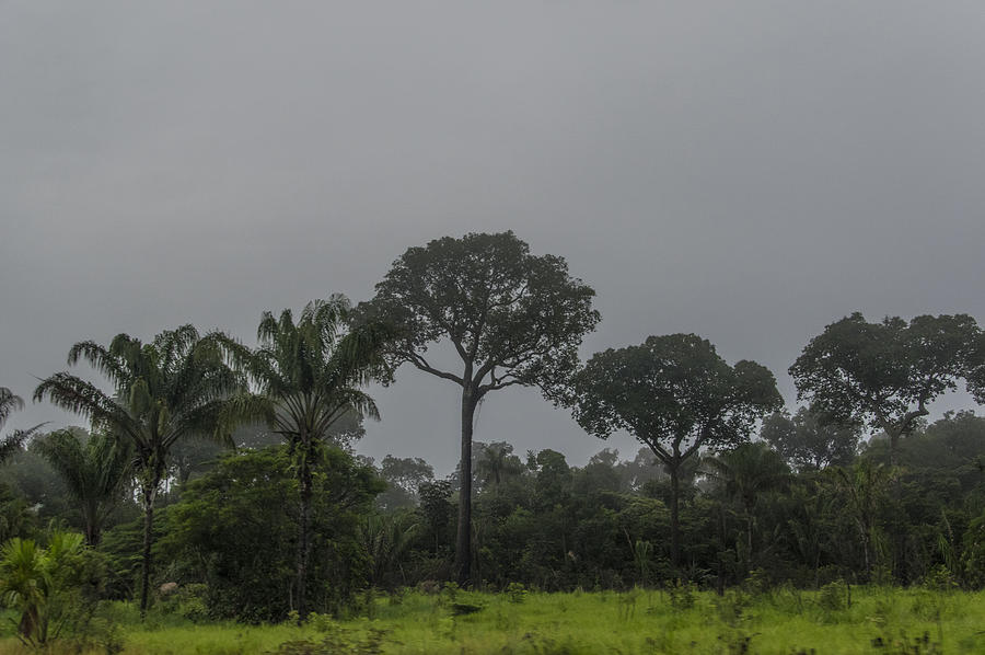 Deforestation And Cattle Raising In The Amazon Photograph by Image by Ramesh Thadani