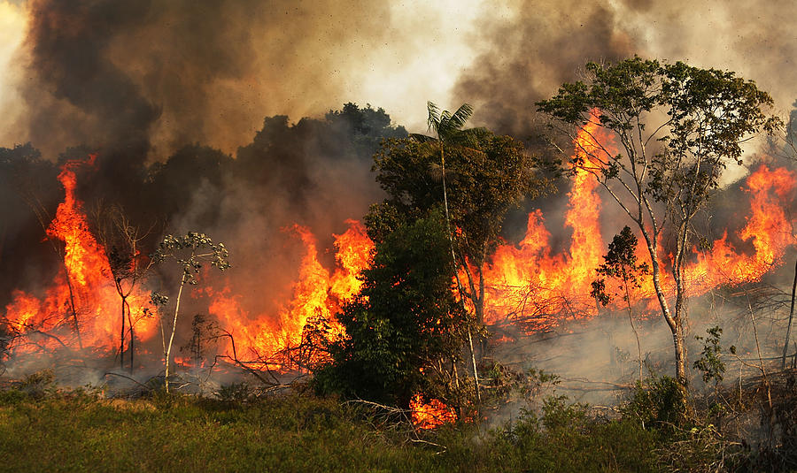 Deforestation In Brazils Amazon Skyrockets After Years Of Decline Photograph by Mario Tama