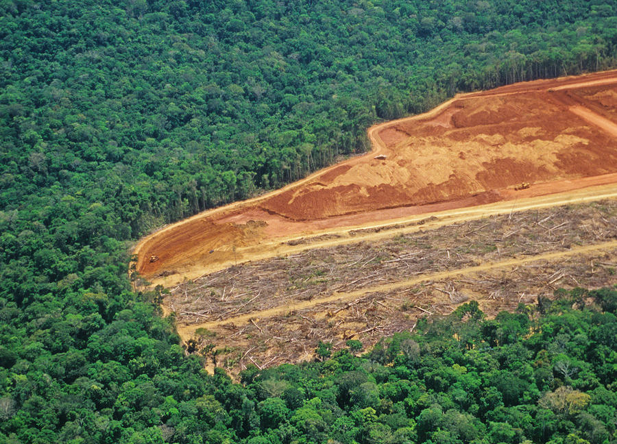 Deforestation in the Amazon Photograph by Luoman