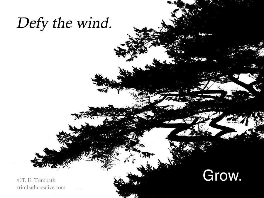 Bonsai Photograph - Defy the wind by Tom Trimbath