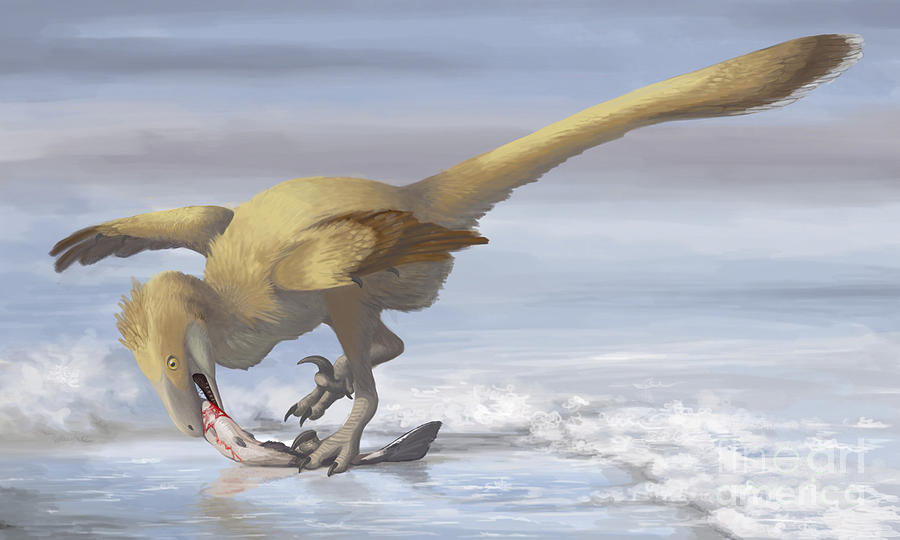 Deinonychus Antirrhopus Preys On A Fish Digital Art