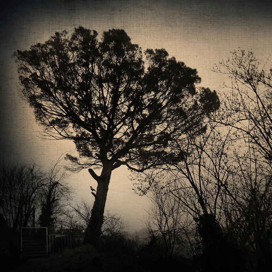 Tree Photograph - Deja Vu by Zapista Zapista