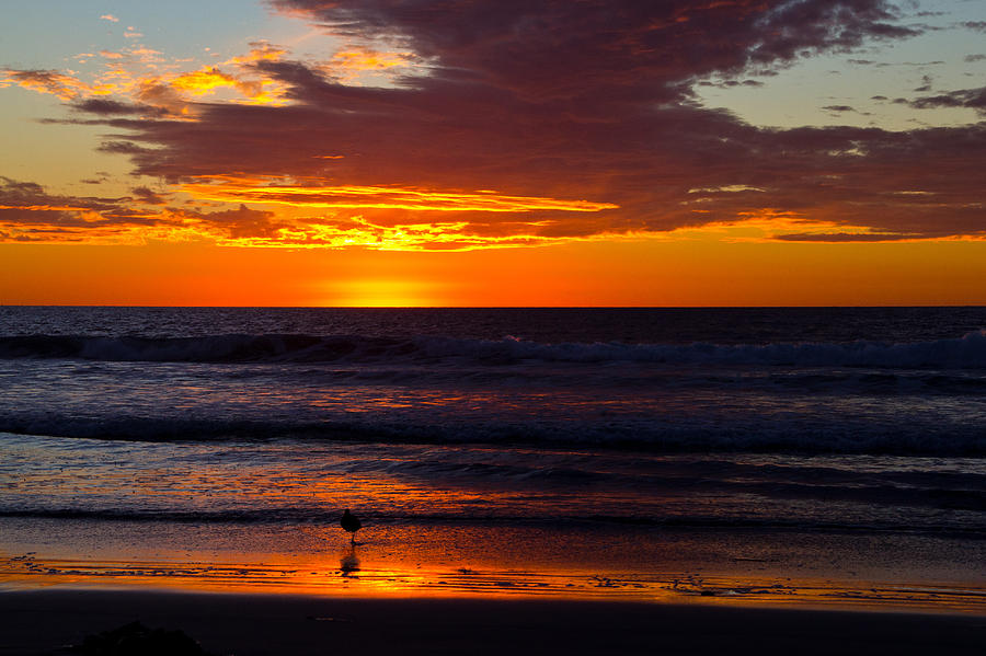 Beach Photograph - Del Mar Sunset by Randy Bayne