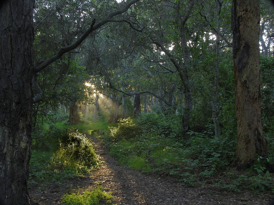 Forest Photograph - Del Monte Forest Pacific Grove Ca by Elery Oxford