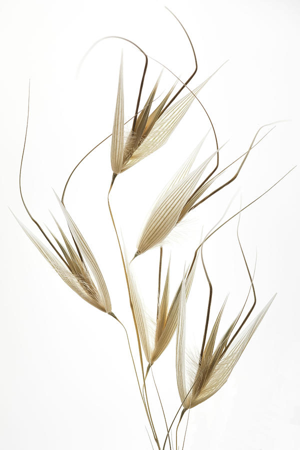 Still Life Photograph - Delicacy Of Nature by Shogun