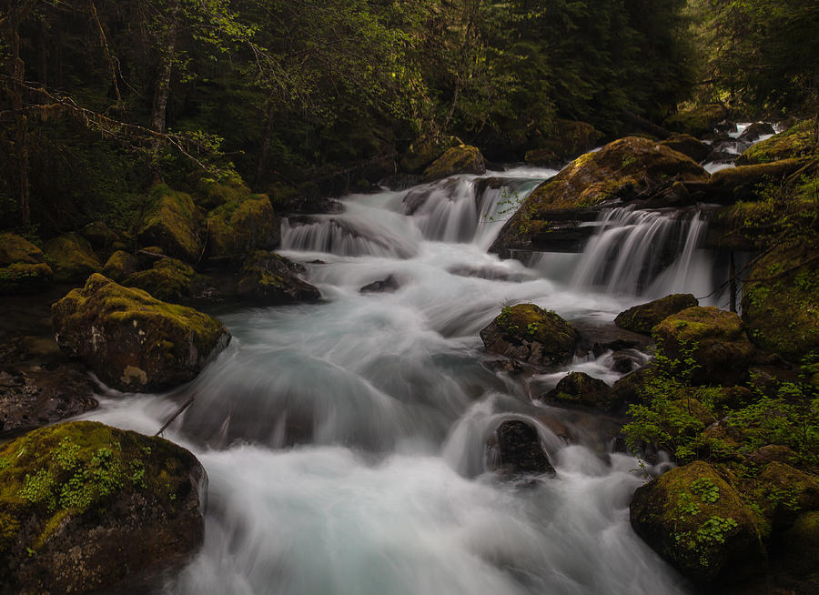 Northwest Photograph - Delicate And Powerful by Mike Reid