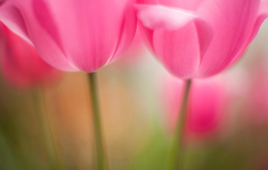 Flower Photograph - Delicate Light Of Spring by Mike Reid