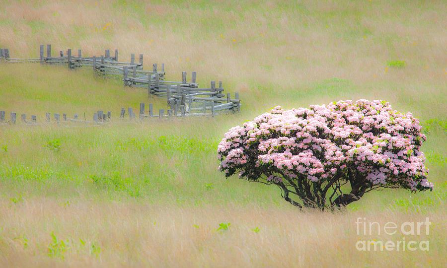 Blue Ridge Parkway Painting - Delicate Meadow - A Tranquil Moments Landscape by Dan Carmichael
