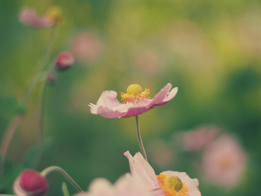 Flowers Photograph - Delicate by Patrick Horgan