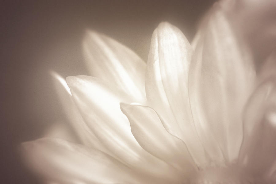 Bloom Photograph - Delicate by Scott Norris