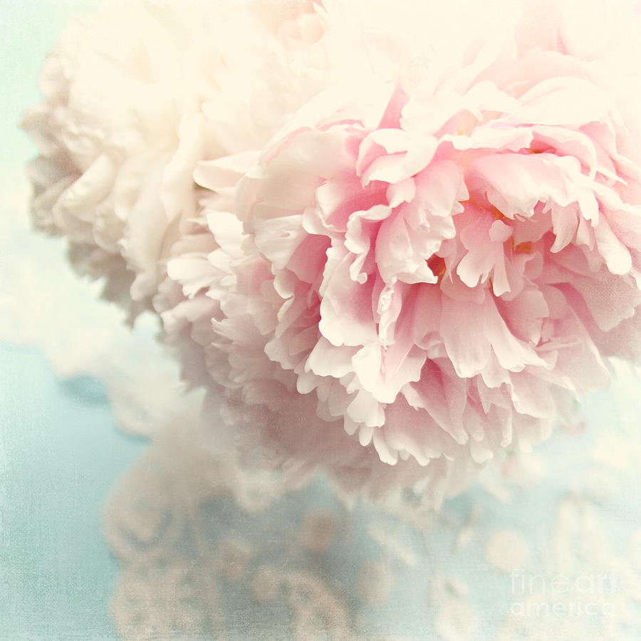 Peony Photograph - Delicate by Sylvia Cook
