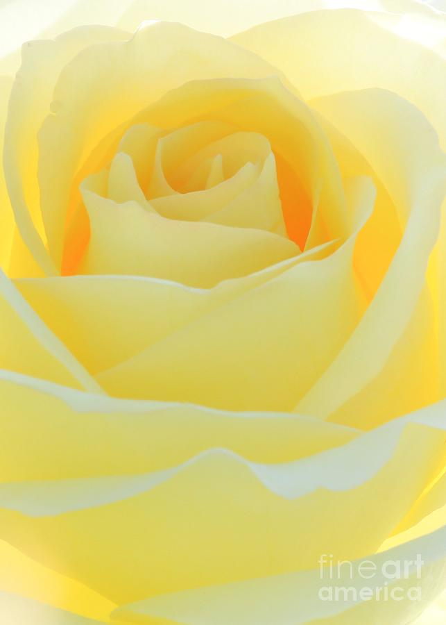 Rose Photograph - Delicate Yellow Rose by Sabrina L Ryan