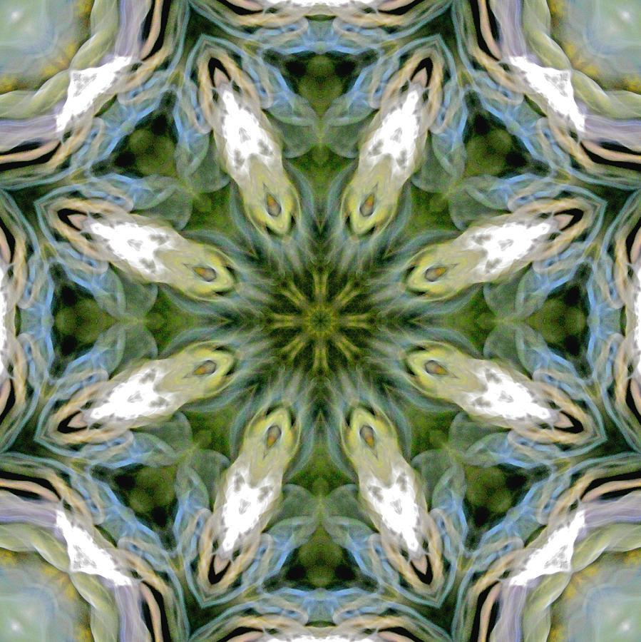 Mandala Photograph - Delight 3 by Lisa Lipsett