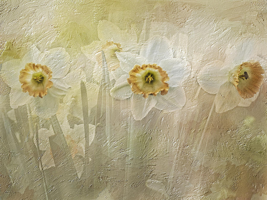 Daffodils Photograph - Delightful Daffodils by Diane Schuster