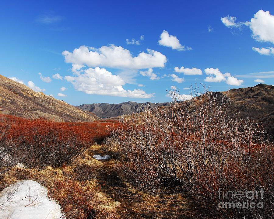 Alaska Photograph - Denali Tundra by Mel Steinhauer
