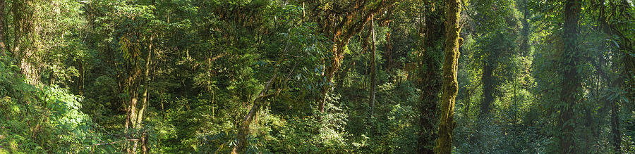 Dense Jungle Foliage Lush Green Forest Photograph by Fotovoyager