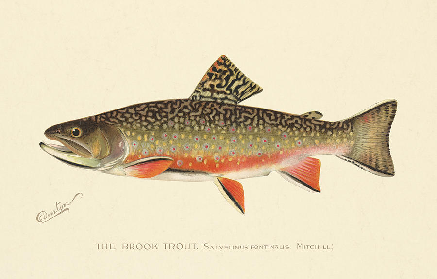 Antique Painting - Denton Brook Trout by Gary Grayson