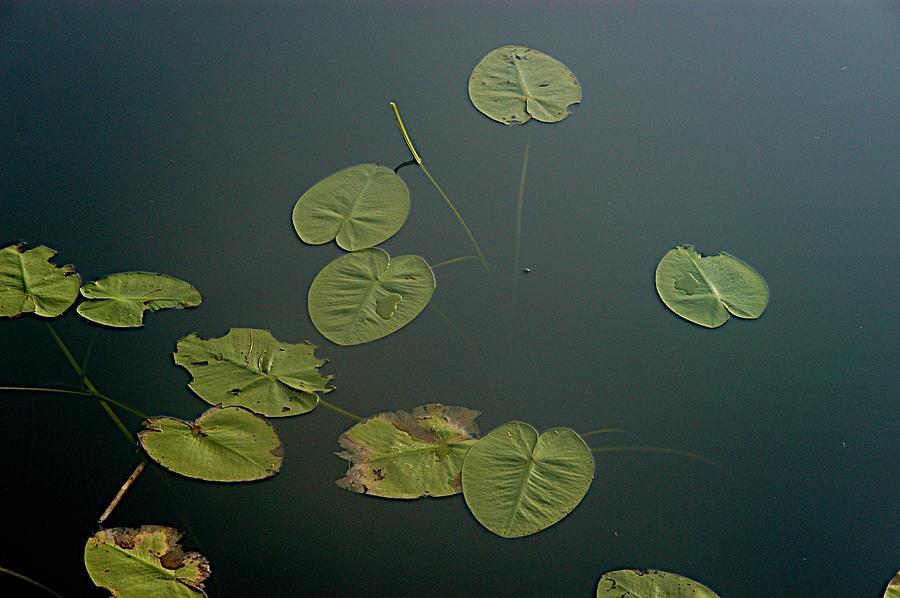 Lake Photograph - Depth by Joseph Yarbrough