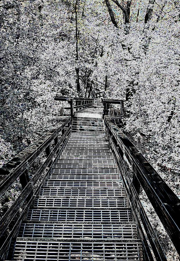 Steps Photograph - Descent Into The Wilderness by James Potts