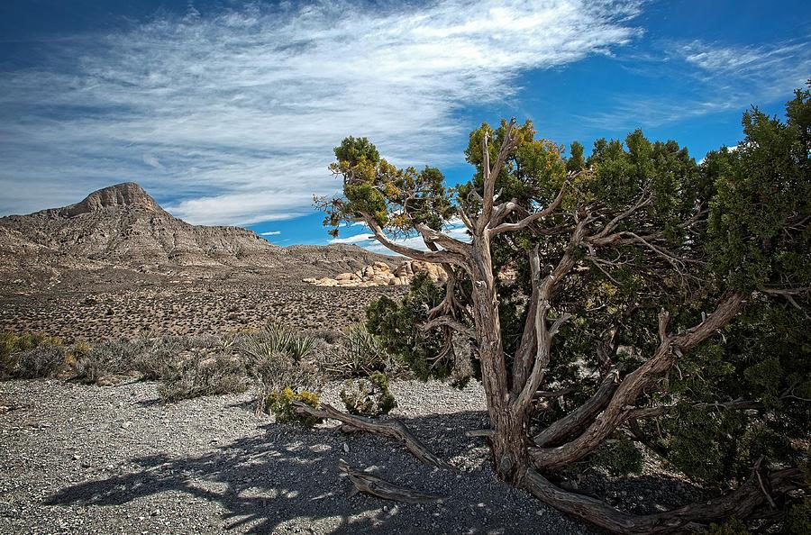Desert Photograph - Desert Beauty by Jen Morrison
