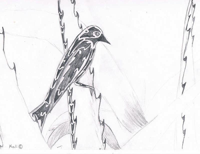 Desert Drawing - Desert Dove  by Kali Kardsbykali