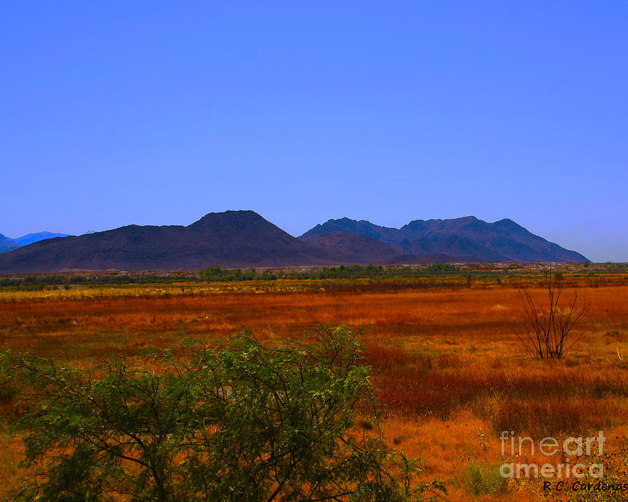 Desert Photograph - Desert Field by Rebecca Christine Cardenas