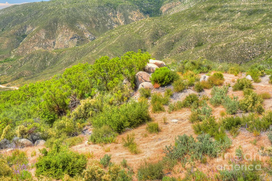 California Photograph - Desert Greenery by Deborah Smolinske