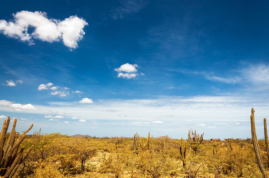 Desert Photograph - Desert Landscape With Deep Blue Sky by Jess Kraft