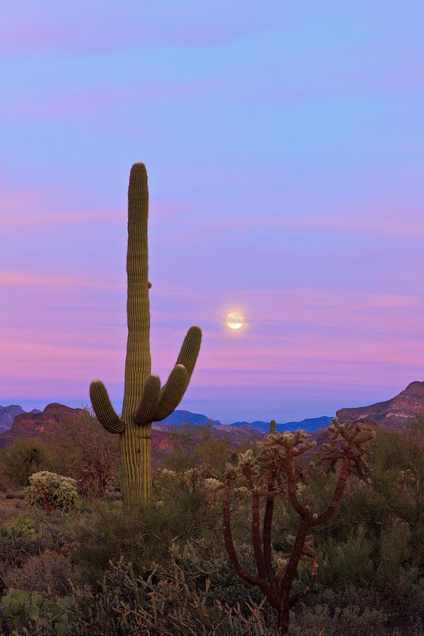 Desert Moon Photograph by Rick Furmanek
