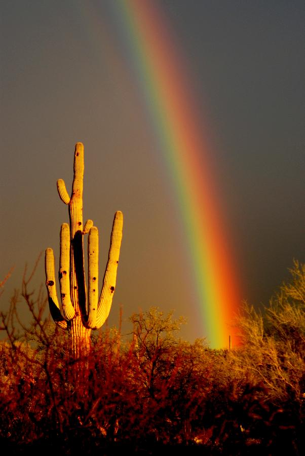 Saguaro Photograph - Desert Rainbow by T C Brown