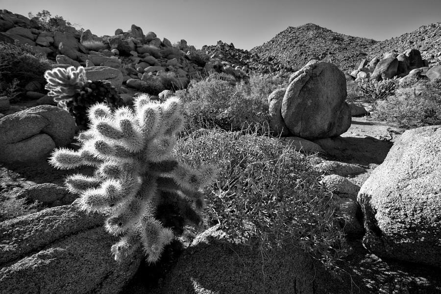 Anza-borrego Desert Photograph - Desert Scene by Peter Tellone