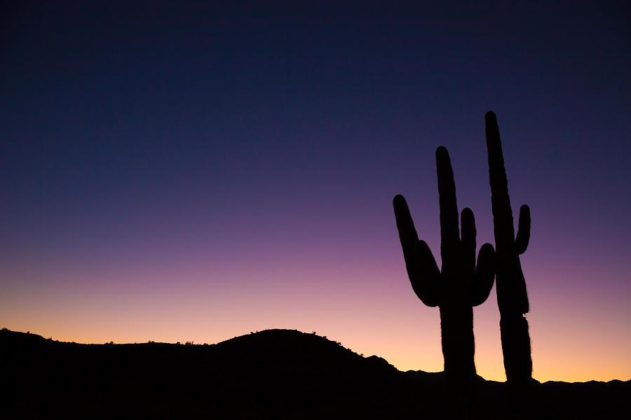 Desert Sentinels by Brad Brizek