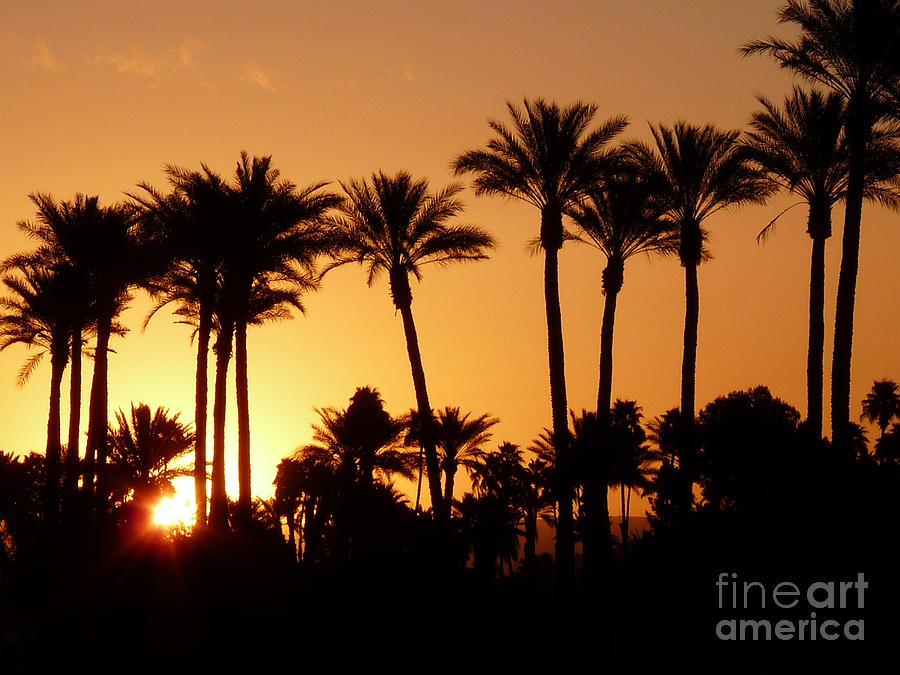 California Photograph - Desert Silhouette Sunrise by Deborah Smolinske