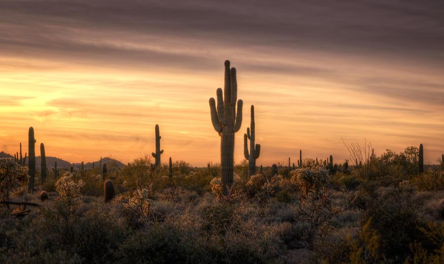 Desert Southwest Sunset Photograph By Saija Lehtonen