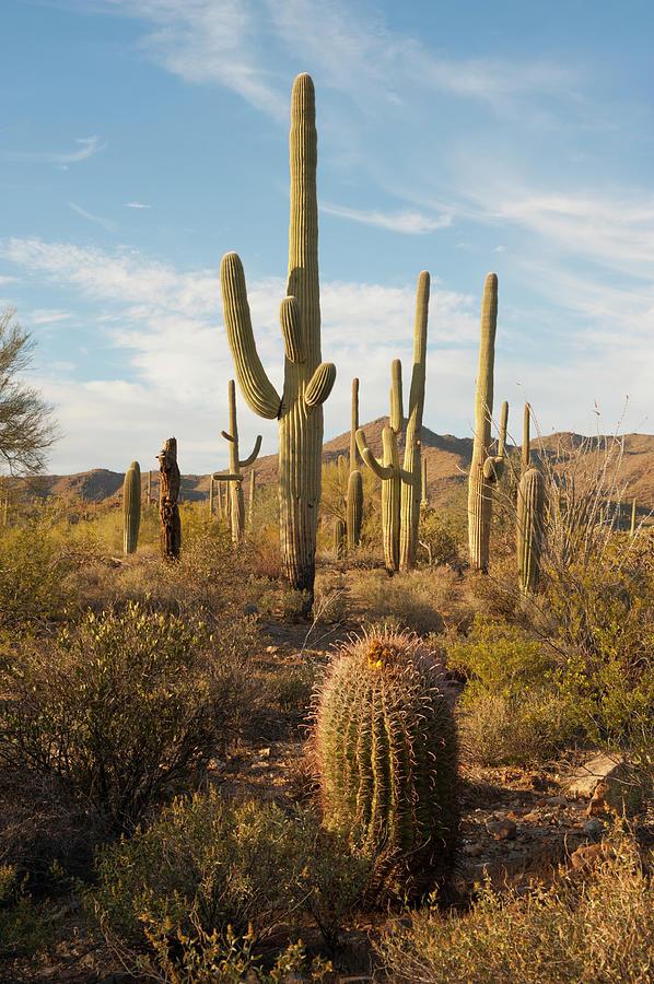 Desert Vegetation Photograph by Chapin31