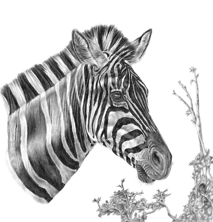 Designer Stripes by Pencil Paws