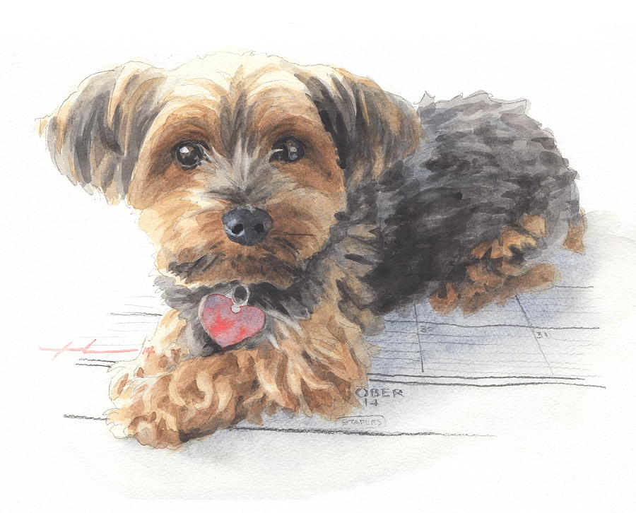 Desktop Calendar Yorky Dog Watercolor Portrait Drawing by Mike Theuer