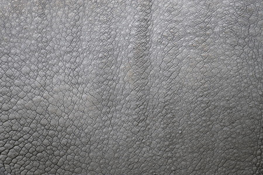 Rhino Photograph - detail of the skin of an Indian rhinoceros in a zoo Netherlands by Ronald Jansen