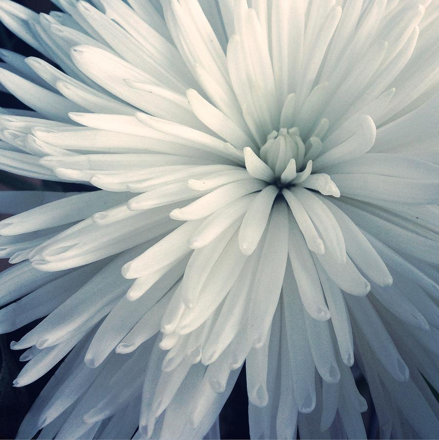 Detail Shot Of Cropped White Flower Photograph by Valerie Locante / Eyeem
