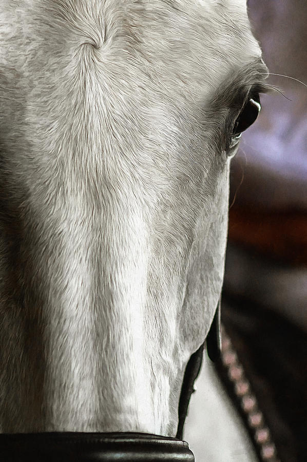 Horse Photograph - Determination by CarolLMiller Photography