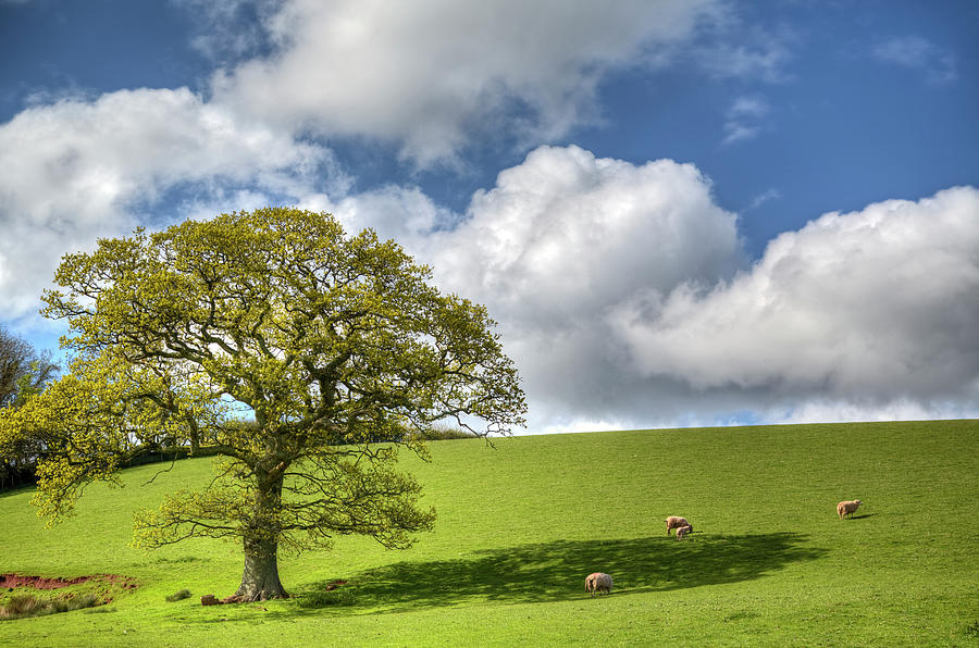 Devon Spring Scene Photograph by Landscapes, Seascapes, Jewellery & Action Photographer
